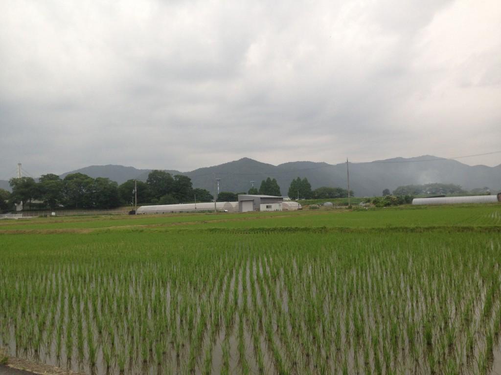 田植えは日本の風物詩
